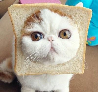 1215面包猫哈哈哈哈哈